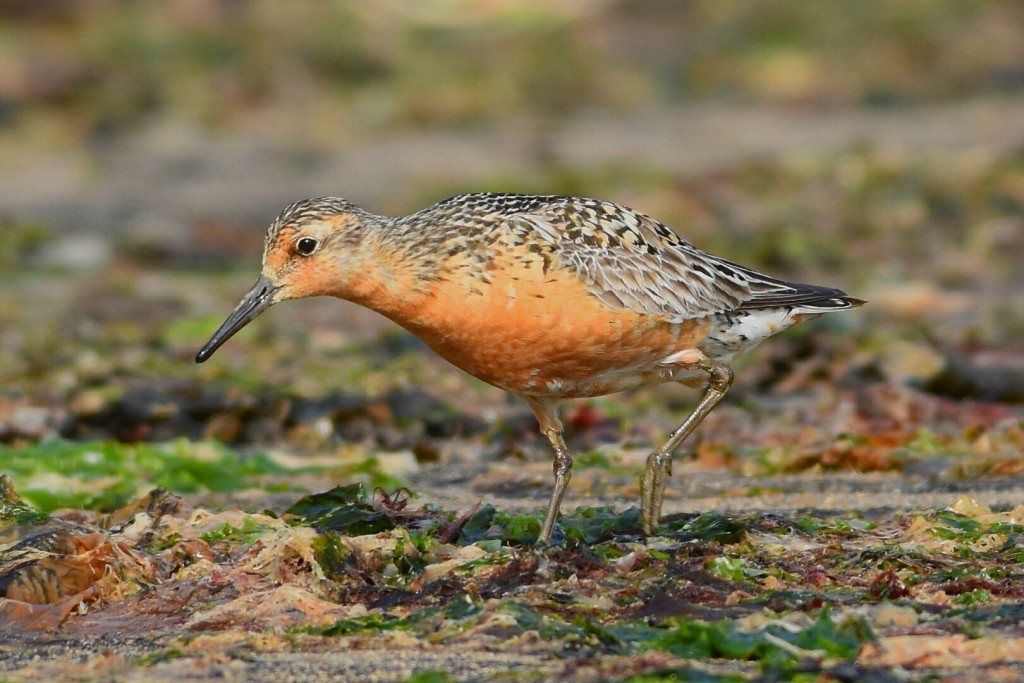 Knot, South Landing, by Andy Hood