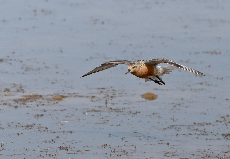 Knot, Thornwick Pools, by Tony Simpson